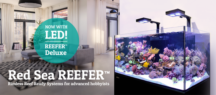 Bulk reef supply coupon code