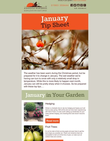 Top Tips for Looking After Your Garden in January