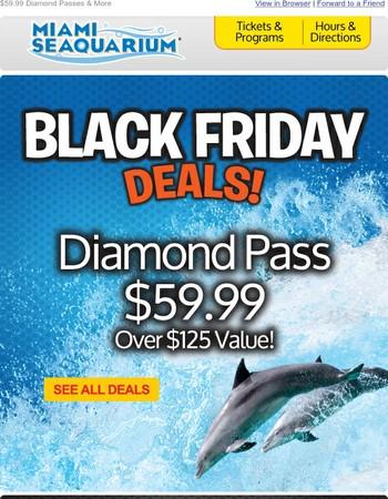 Black Friday Sale – Save BIG!