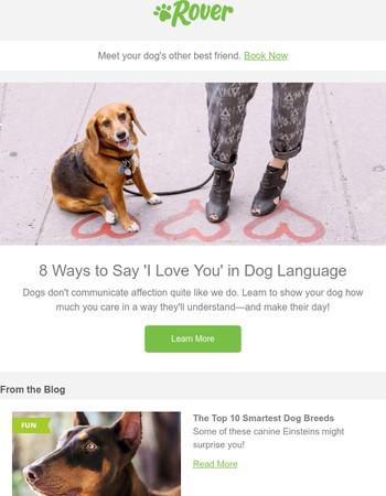 your dog's love language