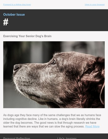 Oct Issue: Exercising Your Senior Dog's Brain | Facing the End | Happy Tails