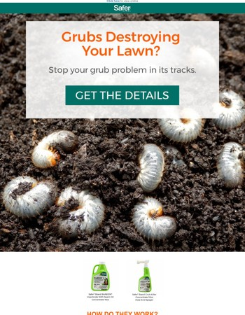 Have a Grub Problem? Destroyed Lawn?