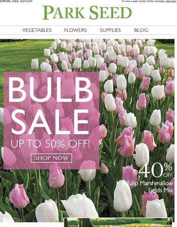 The Best Bulbs for Spring at the Best Prices!