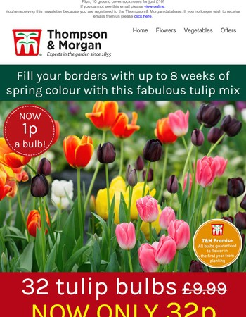 32 tulip bulbs just 32p!