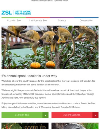 Another new arrival, squirrel monkeys get into Halloween and a new winter event!