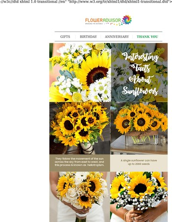 FLOWERPEDIA: 6 Interesting Facts About Sunflowers You Never Know Before