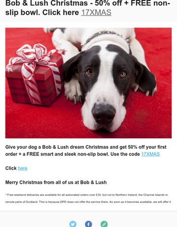 Dream Christmas for dogs - 50% off plus free bowl