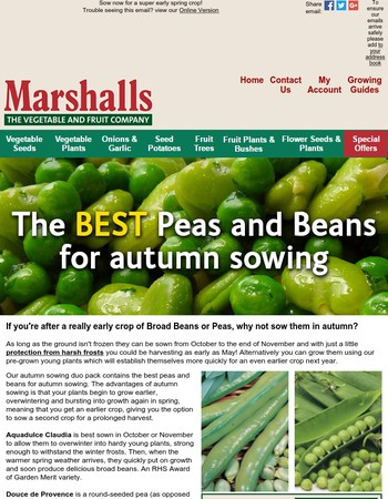 Start your spring harvests NOW with autumn sown Peas and Beans