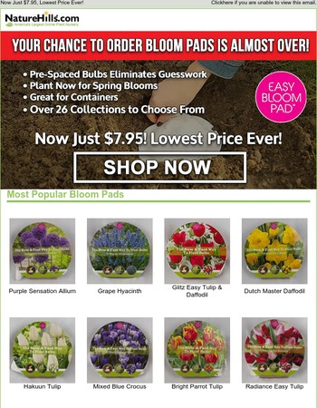 LAST CHANCE to Order Bloom Pad Bulbs