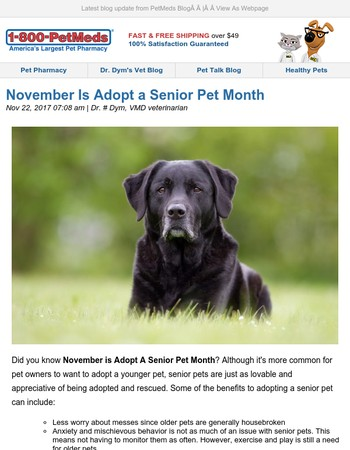 November Is Adopt a Senior Pet Month