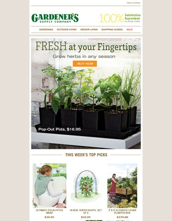 Fresh Herbs are Always in Season