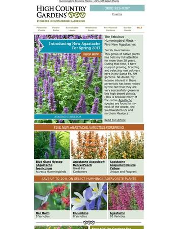 Ezine: Announcing Five New Agastache Varieties For Hummingbirds