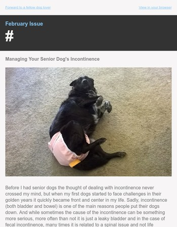 Feb Issue: Managing Incontinence | Is Pet Insurance Worth It? | Stretchable Straps
