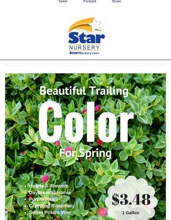 Star Nursery Newsletter