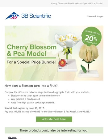 How does a Blossom turn into a Fruit?