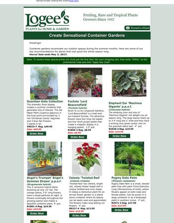 Create Sensational Container Gardens