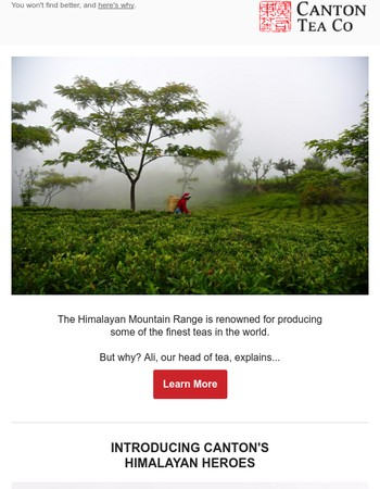 The best spring tea from the Himalayas