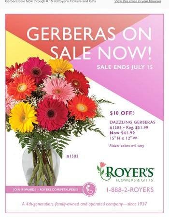 Gerberas On Sale Now