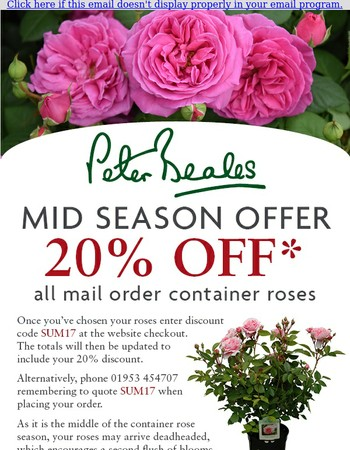 Peter Beales: Mid Season Container Rose Offer
