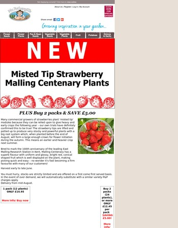 NEW! Misted Tip Strawberry Malling Centenary Plants