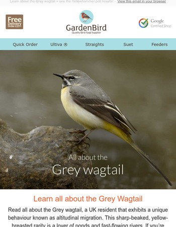 All about the Grey Wagtail by Gardenbird