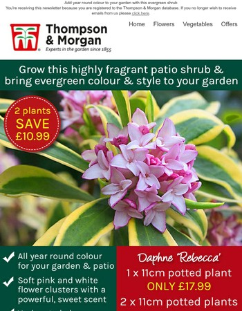 Must-have Scented Daphne - SAVE £10.99!