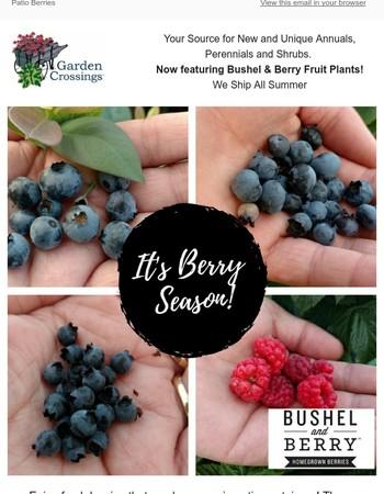 It's Berry Season...