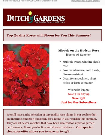 Save on Fabulous Roses in Our Summer Clearance Sale!