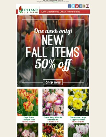 New fall items | 50% off