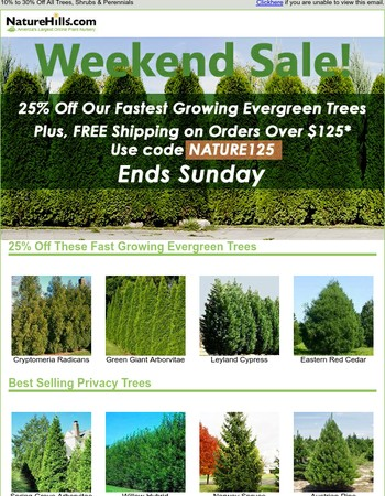 Our FASTEST Growing Evergreens! 25% Off + FREE Shipping!