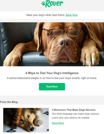 How to test your dog's intelligence