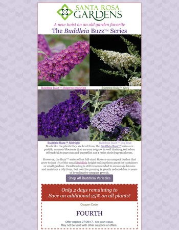 Butterflies and gardeners are buzzing about Buddleia Buzz™!