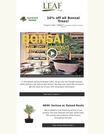 Video: Styling a San Jose Juniper + 10% off all Bonsai Trees!
