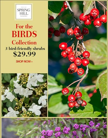 Entice birds with this collection of shrubs + free birdseed