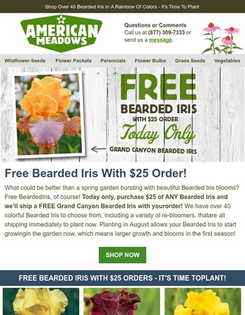 Free Bearded Iris - Today Only