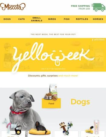 Yelloweek starts!   Your pet deserves it