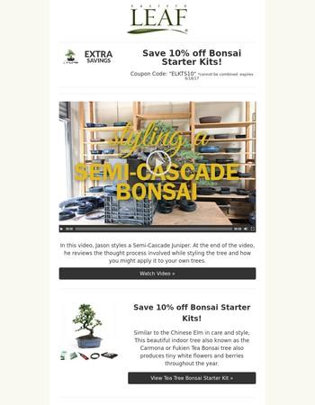 Video: Bonsai Timelapse : Semi-Cascade Juniper +10% off Bonsai Starter Kits!