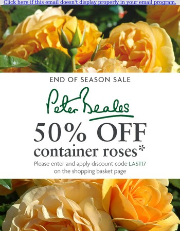 Peter Beales: A Massive 50% off container roses