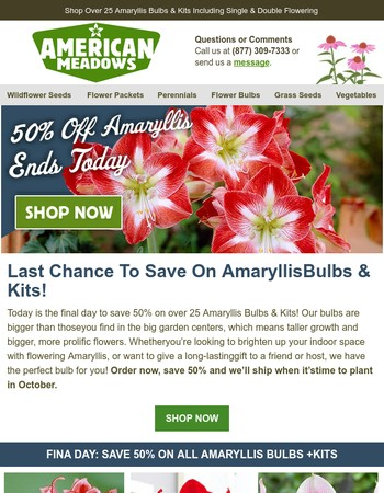 50% Off Amaryllis - Ends Today